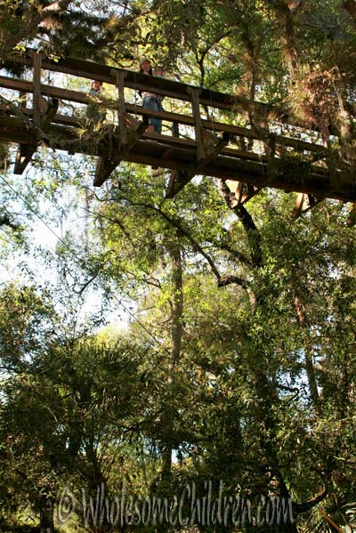 Canopy Walk bridge @Myakka River State Park.
